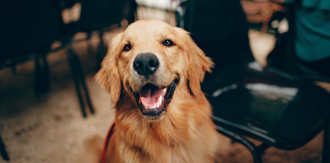 Gesundheit beginnt im Mund – und das auch beim Hund!